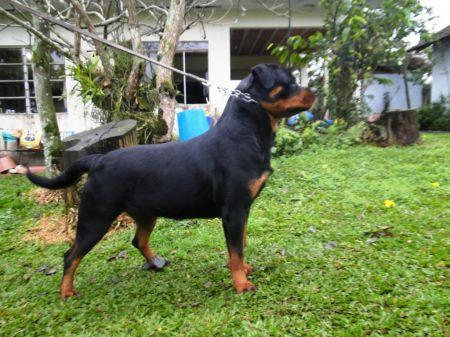 Polly Fart Wa Von Rottssel - Polly Fart - 21 meses